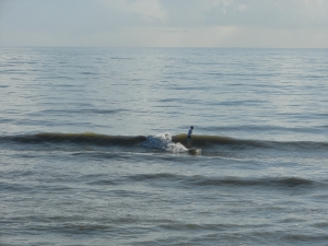 Image 2 of 4 shot sequence, longboarder on a perfect glass waist high left.