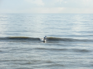 A small 2.5 to 3 foot winds swell at 7 seconds, at Hightowers/RC's.  Image 1 of 4 in sequence.  Photos by Oldwaverider