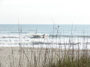 He throws a little spray to add color between the Sea Oats...image 3 of 5 in sequence. Johnson Ave.