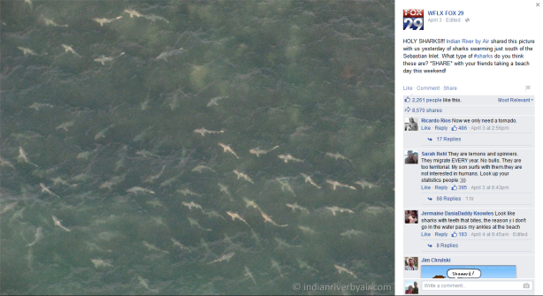 Sharks-south-of-Sebastian-Inlet-WFLX-Fox29-04-03-15 - shared by Indian River by Air